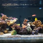 Sanny's Reef - Lato Sinistro
