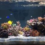Sanny's Reef - Lato Destro